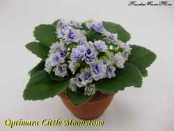 Фиалка Optimara Little Moonstone (стартер)